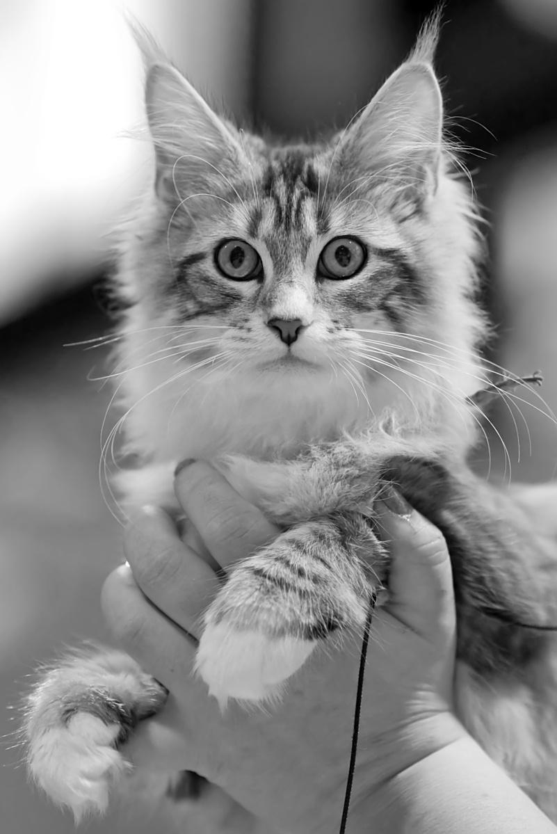 Rotcat Didi [MCO ns 09 22], photo 137033, 2009-11-28