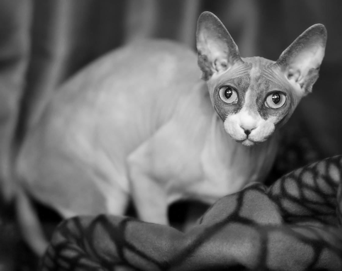 Hobbitqueen's Betty Boop (Luna) [SPH g 09], photo 137068, 2009-11-28