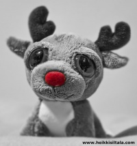 photo 137120 . Rudolph The Red-Nosed Reindeer . 2009-11-28
