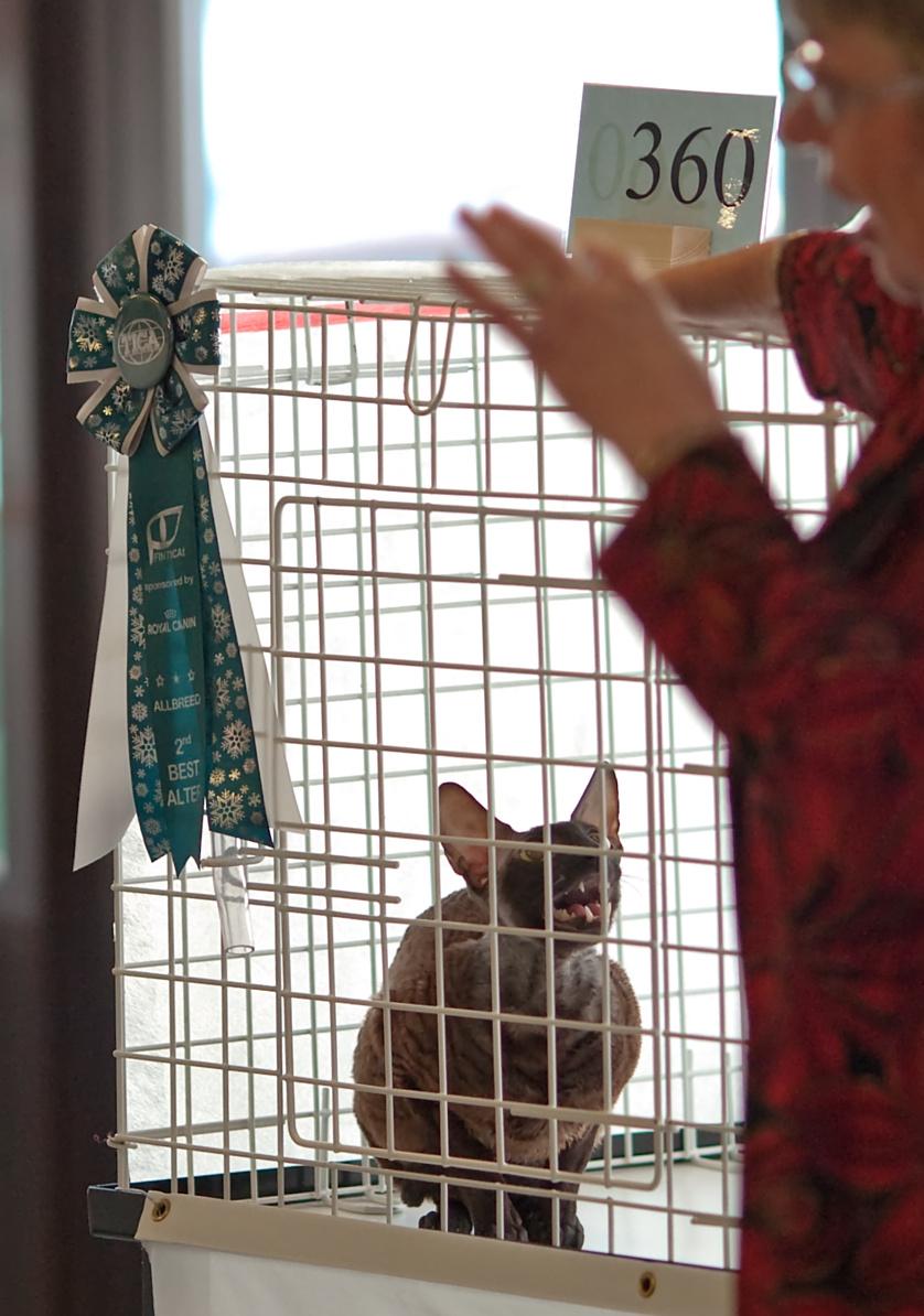 PR Raitakatin Jango Fett (Jango) [CRX n], kuva 138133, 2.1.2010