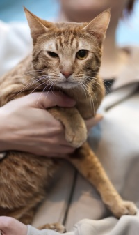 photo 139100 . IC Topspot Mysterious Solembum (Sani) [OCI o 24] . 2010-01-09