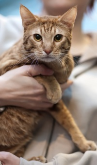 photo 139101 . IC Topspot Mysterious Solembum (Sani) [OCI o 24] . 2010-01-09