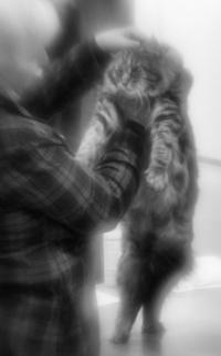 kuva 140001 . kissanäyttelyn taikaa . 10.1.2010