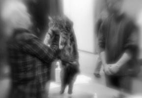kuva 140002 . kissanäyttelyn taikaa . 10.1.2010
