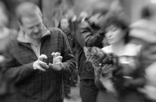 kuva 140066 . kissanäyttelyssä tapahtuu . 10.1.2010