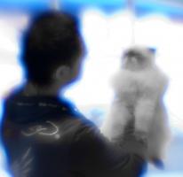 photo 140081 . cat show magic . 2010-01-10