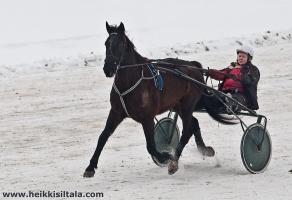 photo 141284 . Pegasos, the flying horse . 2010-03-06