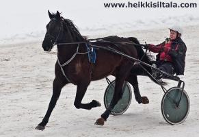 kuva 141285 . Pegasos, lentävä hevonen . 6.3.2010