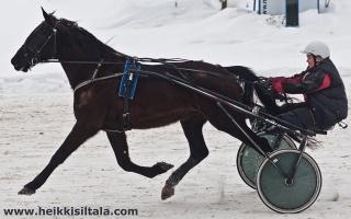 photo 141287 . Pegasos, the flying horse . 2010-03-06