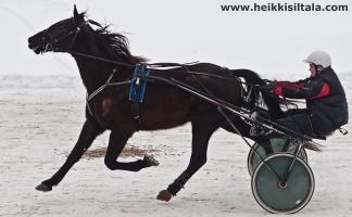 kuva 141288 . Pegasos, lentävä hevonen . 6.3.2010