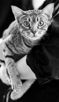 kuva 141157 . IC Silvercomet Audrey Hepburn [OCI b 24] . 6.3.2010