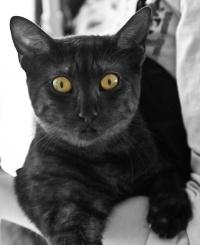 photo 142156 . Chai-lai Paniwi Raziya (Freya) [MAU ns] . 2010-03-07