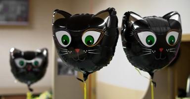 photo 147002 . cat balloons . 2010-04-04