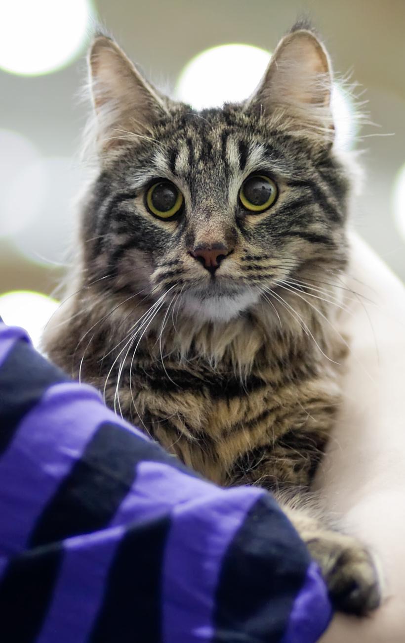 Cat'omatic Cute Cotillion (Heta) [NFO n 22], photo 151031, 2010-05-15