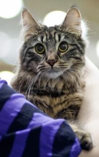 photo 151031 . Cat'omatic Cute Cotillion (Heta) [NFO n 22] . 2010-05-15