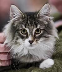 kuva 153002 . Sterrekattens You Never Know (Junnu) [NFO n 09 23] . 12.6.2010