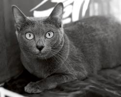 kuva 159094 . Catfever's Sarai [KOR] . 26.9.2010