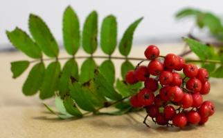 photo 160004 . the autumn berries . 2010-10-02