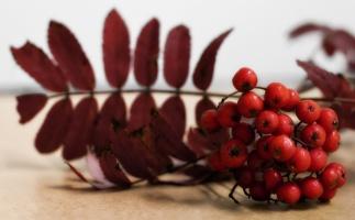photo 160005 . the autumn berries . 2010-10-02