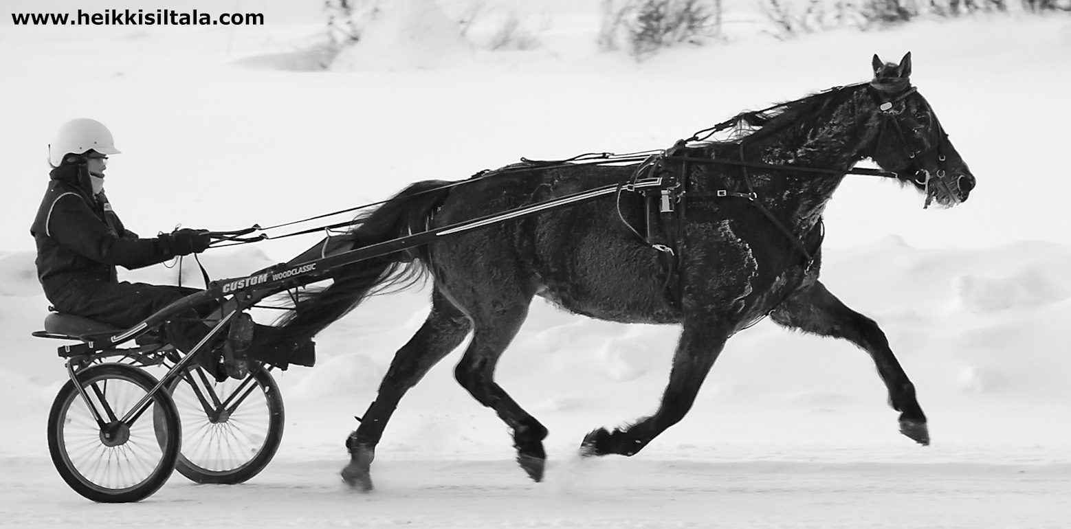 the horse, photo 166001, 2011-01-08