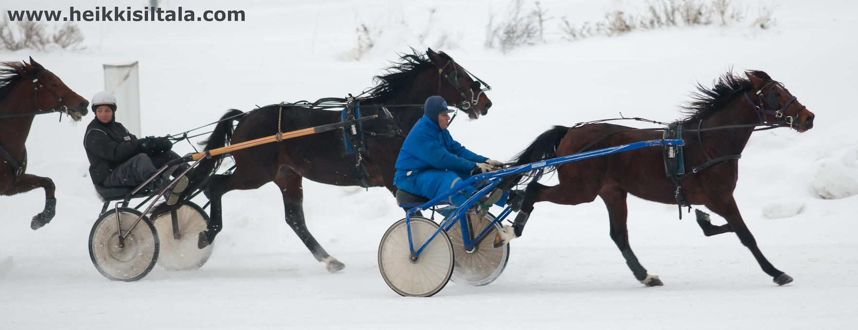 hevoset, kuva 166054, 8.1.2011
