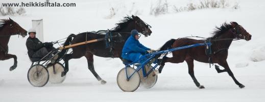 photo 166054 . the horses . 2011-01-08