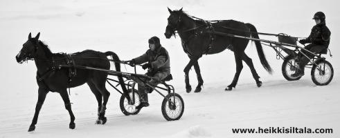 photo 167080 . the horses . 2011-01-09