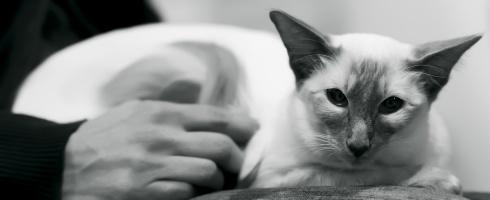 kuva 168006 . Nicator Miss Moneypenny (Tihru) [BAL c] . 29.1.2011