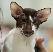 photo 168034 . Bestcats Electrify Exclusive [OSH b 03] . 2011-01-29