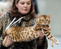 photo 168036 . Africasia Leopard Maya Gold [BEN n 24] . 2011-01-29