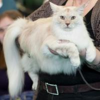 photo 169213 . 2011-03-12