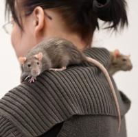 photo 171030 . rats . 2011-04-17
