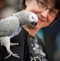 photo 171045 . Grey Parrot . 2011-04-17