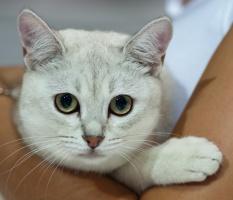 photo 175012 . Mi'cat Emerald of Elroy [BML ns 11] . 2011-07-30