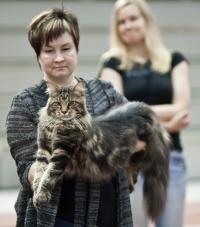 kuva 178014 . Mostlycats Justify (Justin) [MCO n 22] . 3.9.2011
