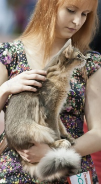photo 178207 . Foxkiss Athene noctua (Taiga) [SOM a] . 2011-09-03
