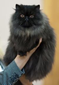 photo 179121 . CH Chiritan Black Pearl [PER n] . 2011-09-10