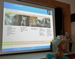 photo 180063 . Russian Blue presentation . 2011-09-17