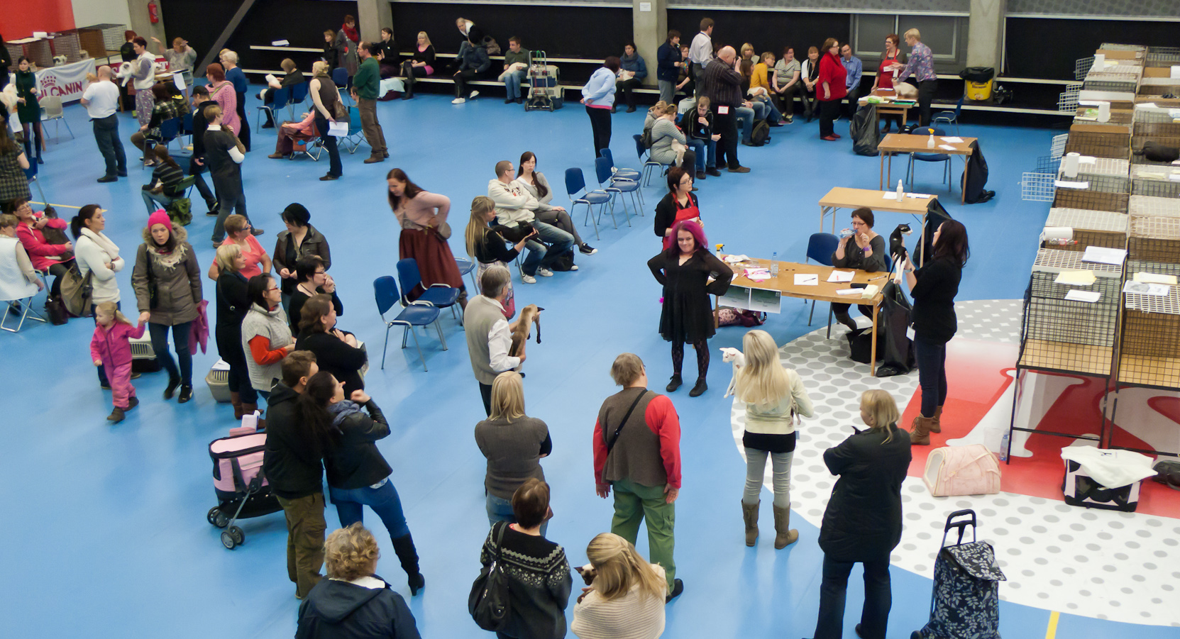 yleiskuvaa näyttelypaikalta, kuva 185028, 20.11.2011