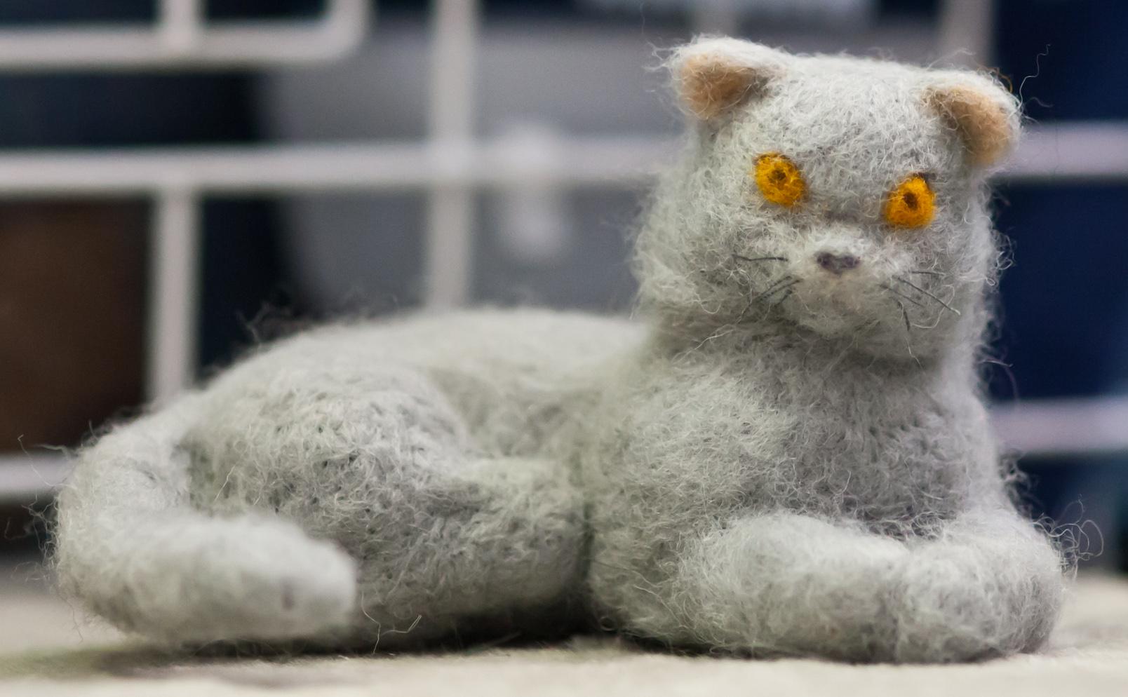 näyttelyn pienin kissa, kuva 188091, 14.1.2012