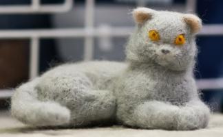 kuva 188091 . näyttelyn pienin kissa . 14.1.2012