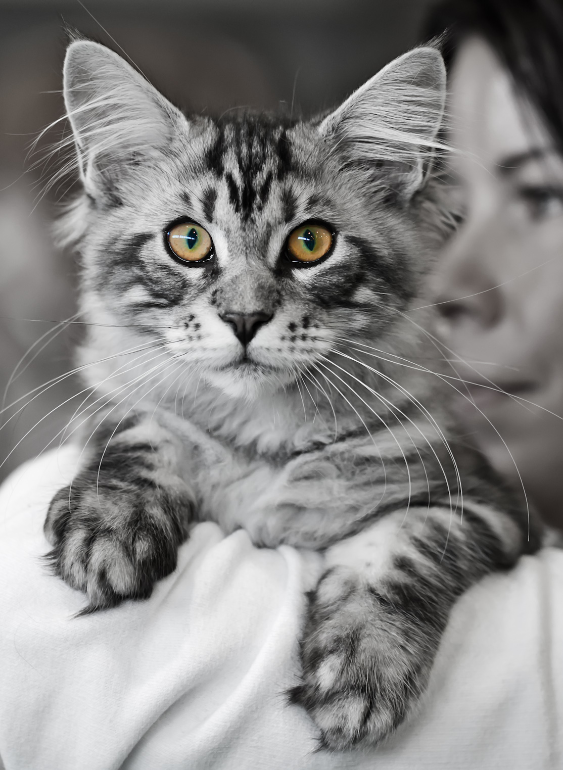 Satinante's Edward Cullen (Eetu) [MCO ns 22], photo 189036, 2012-03-03