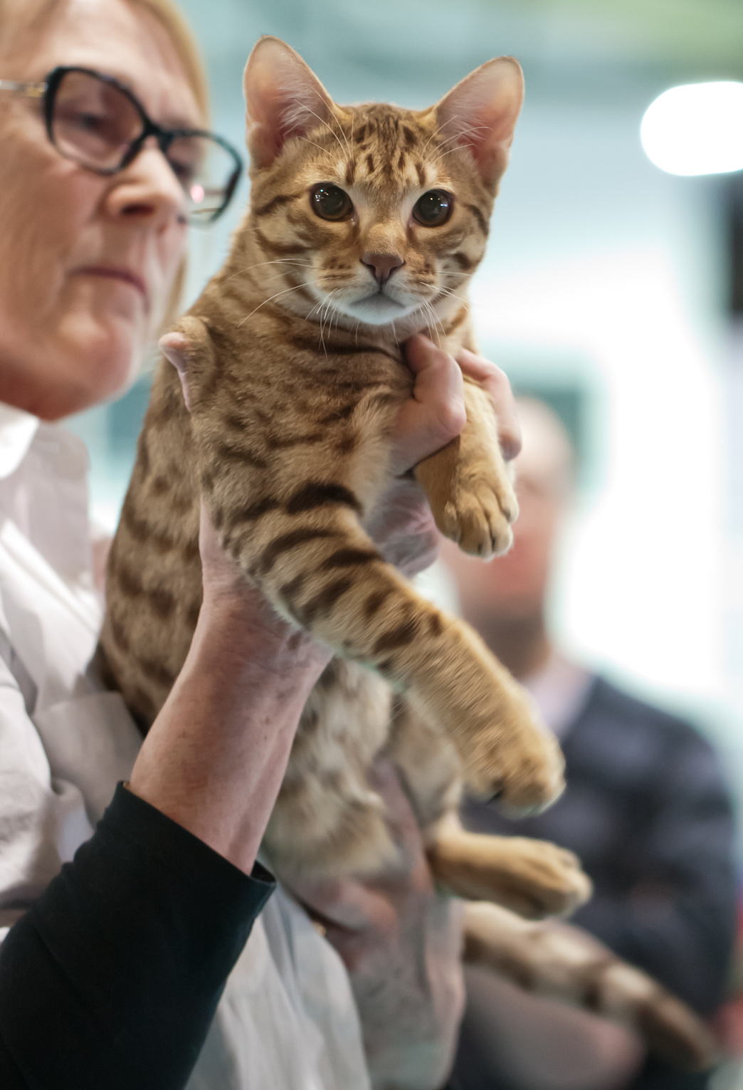 Topspot Gato-Do-Mato [OCI b 24], photo 189095, 2012-03-03