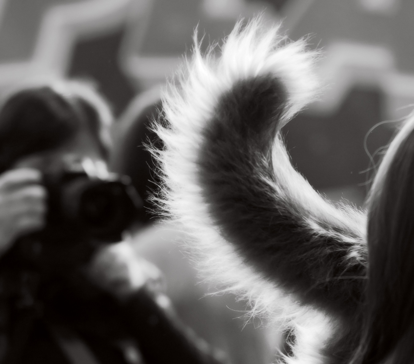 the tail, photo 189112, 2012-03-03