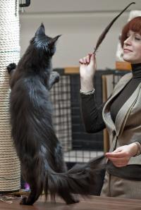 kuva 190020 . GIC NomenEst Priscilla Black [MCO n] . 10.3.2012