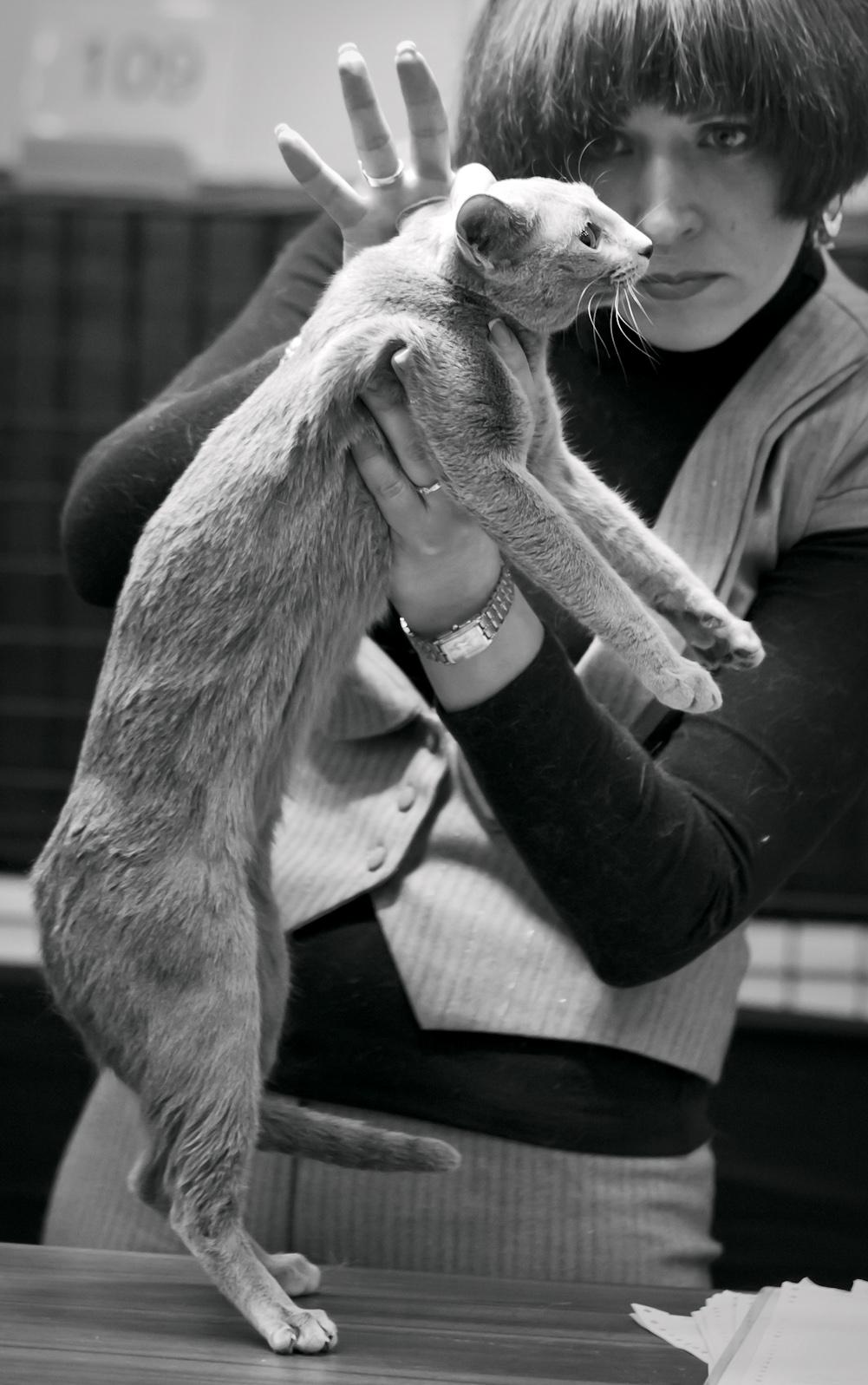 [RUS], kuva 190112, 10.3.2012