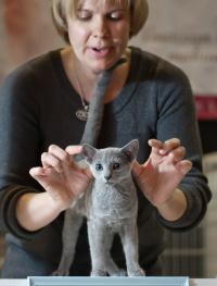 photo 192043 . Sunna Nordica Oberon [RUS] . 2012-03-24