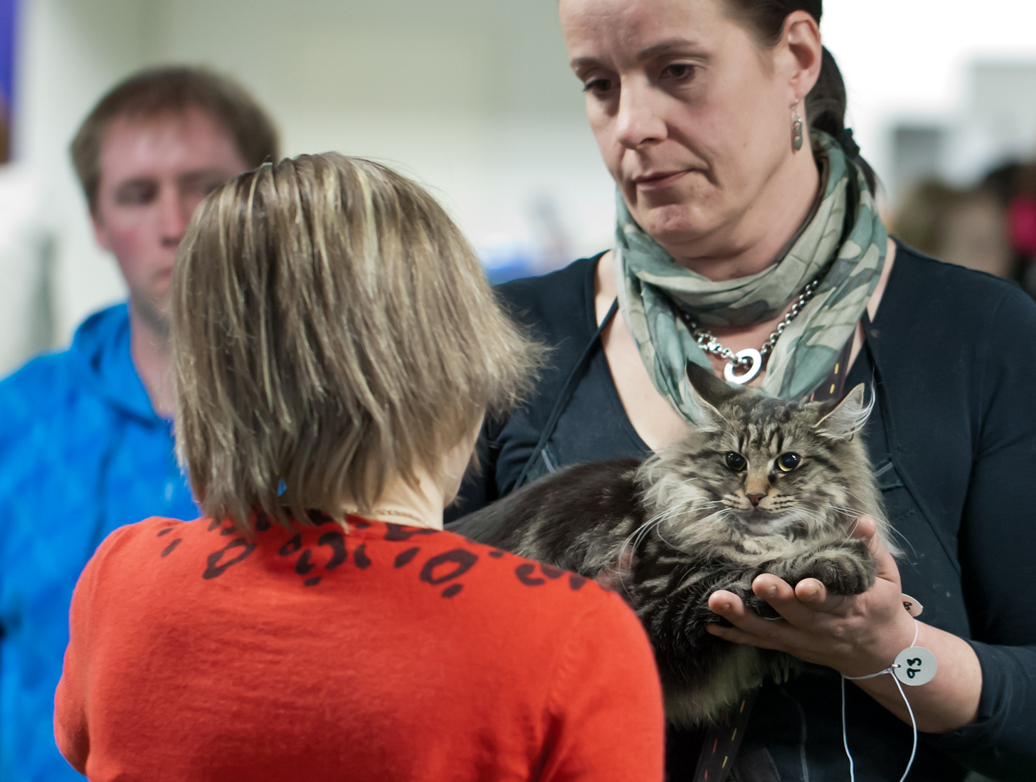 Cat'omatic Hekla [NFO n 22], kuva 193052, 14.4.2012