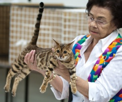 kuva 194002 . CattiCartano Catwalk Glam (Oona Murunen) [BEN n 24] . 28.4.2012