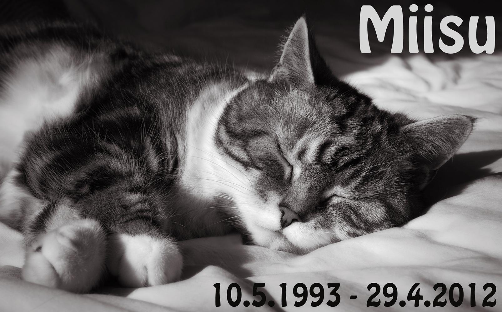 Miisu [HCS fs 09 22] female 1993-05-10 - 2012-04-29, photo 194100, 2012-04-28